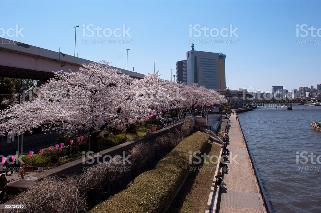 Landscape of Sumidagawa and railway bridge, water bus in Tokyo. stock photo