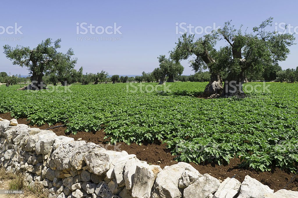 Landscape of sustainable agriculture. stock photo