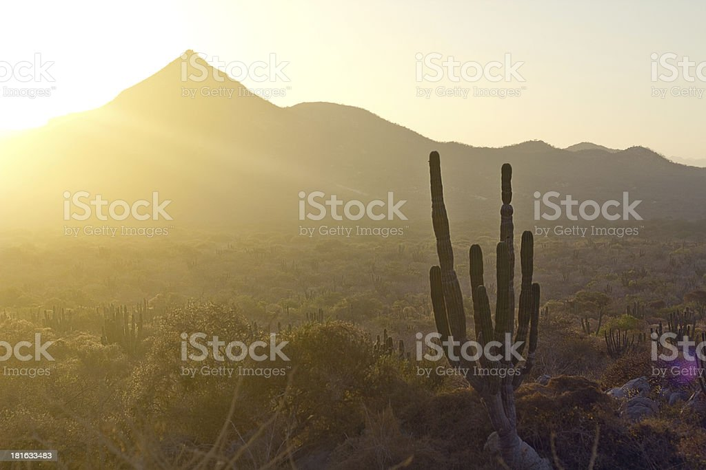 Landscape of the desert, cactus and mountains in Mexico. stock photo