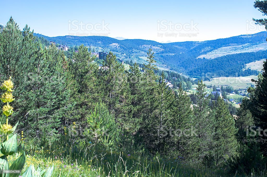 Landscape of the forest and Pyrenees mountains stock photo