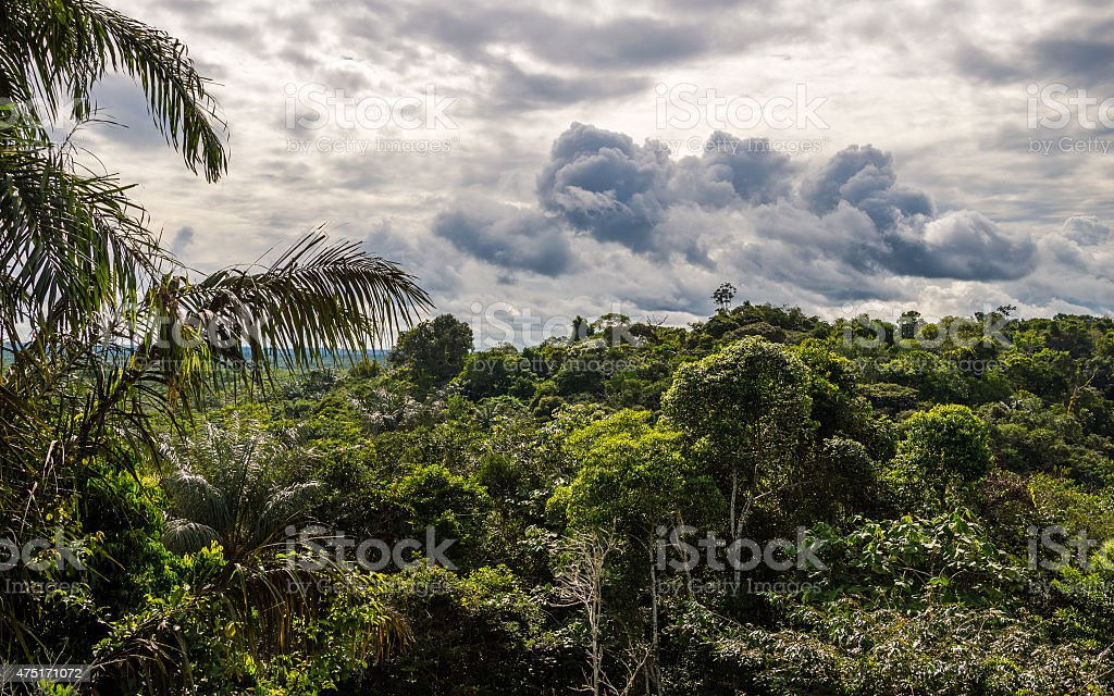 Landscape of the jungle in Cuyabeno Wildlife Reserve. stock photo