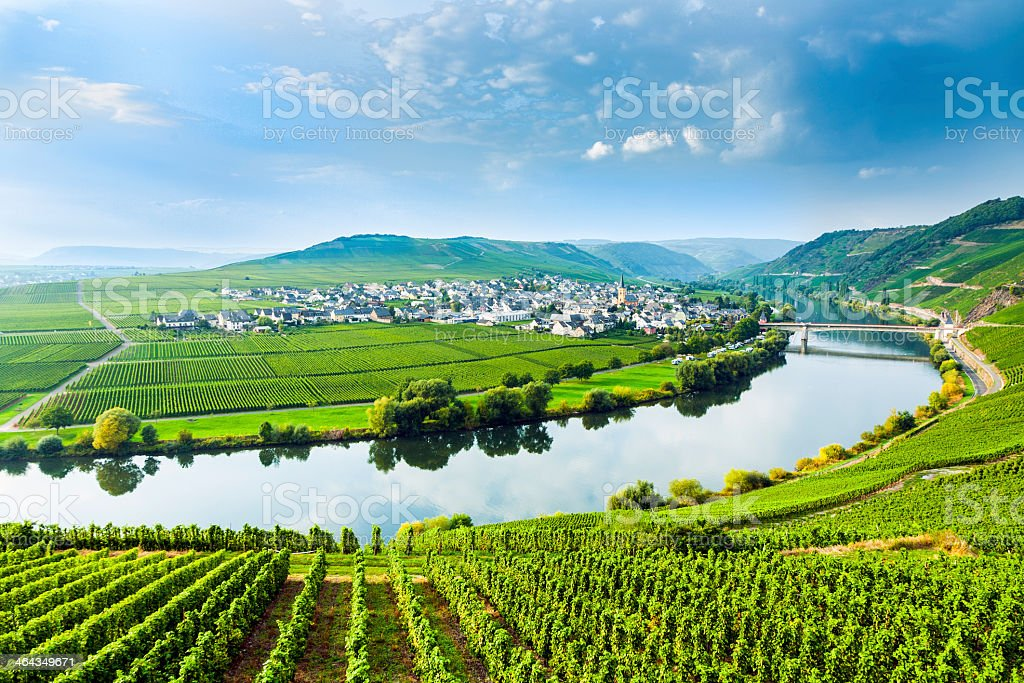 Landscape of the Moselle Sinuosity with rows of vineyards stock photo