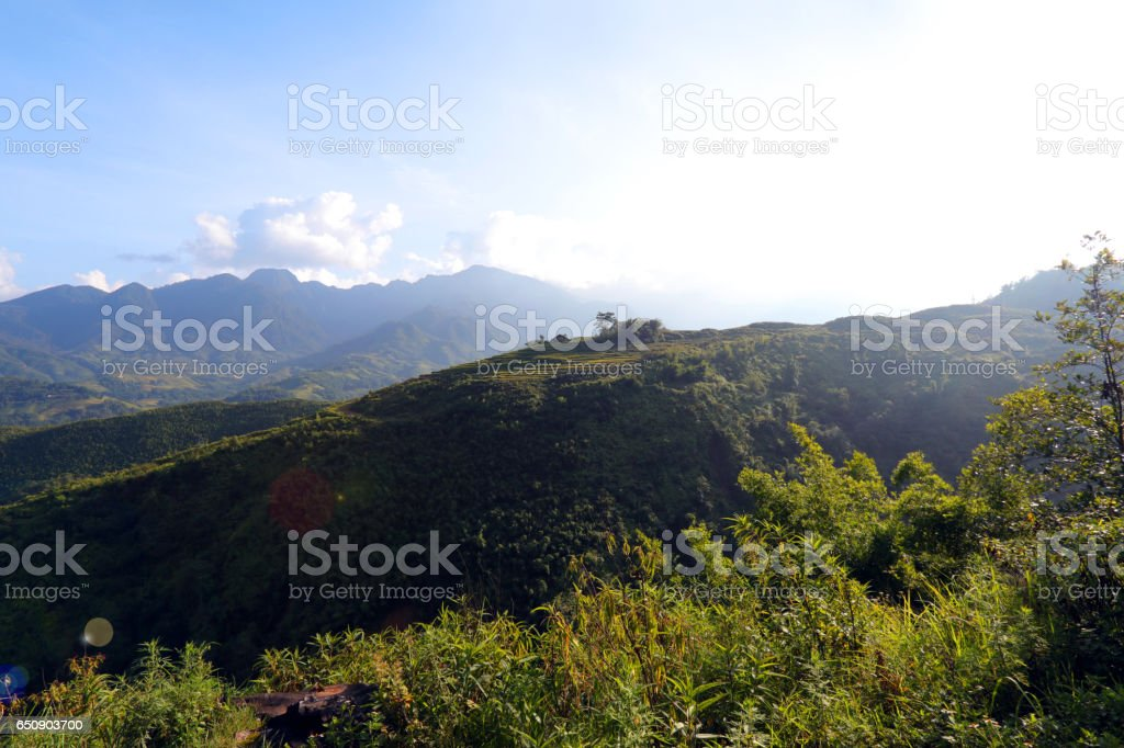 Landscape of the North of Vietnam, Rice Fields stock photo