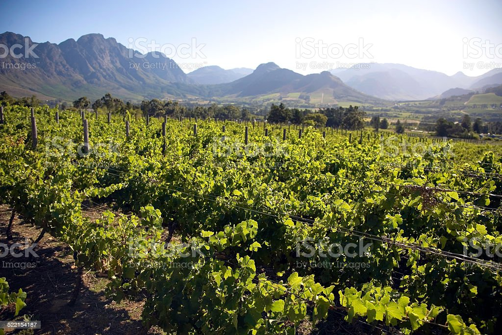 Landscape of the wineries in South Africa stock photo