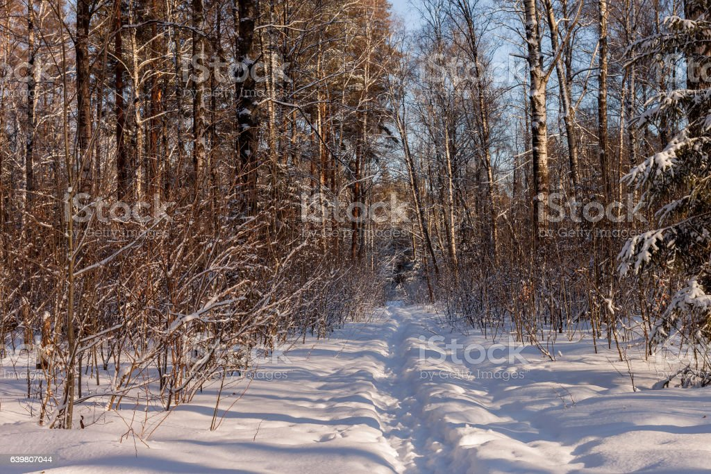 Landscape of the winter forest stock photo