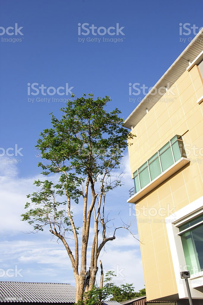landscape of tree and building royalty-free stock photo