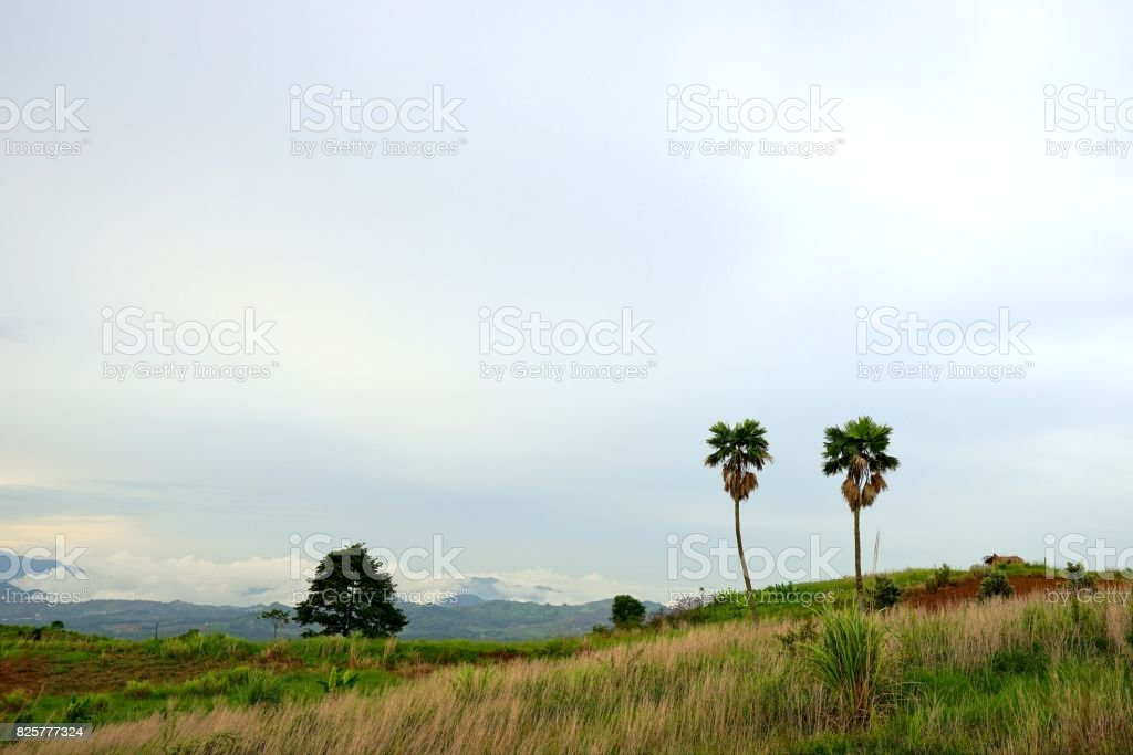 Landscape of two sugar palm trees and wooden cottage in meadow on the hill with cloudy sky, Khao Kho, Phetchabun province, Thailand stock photo