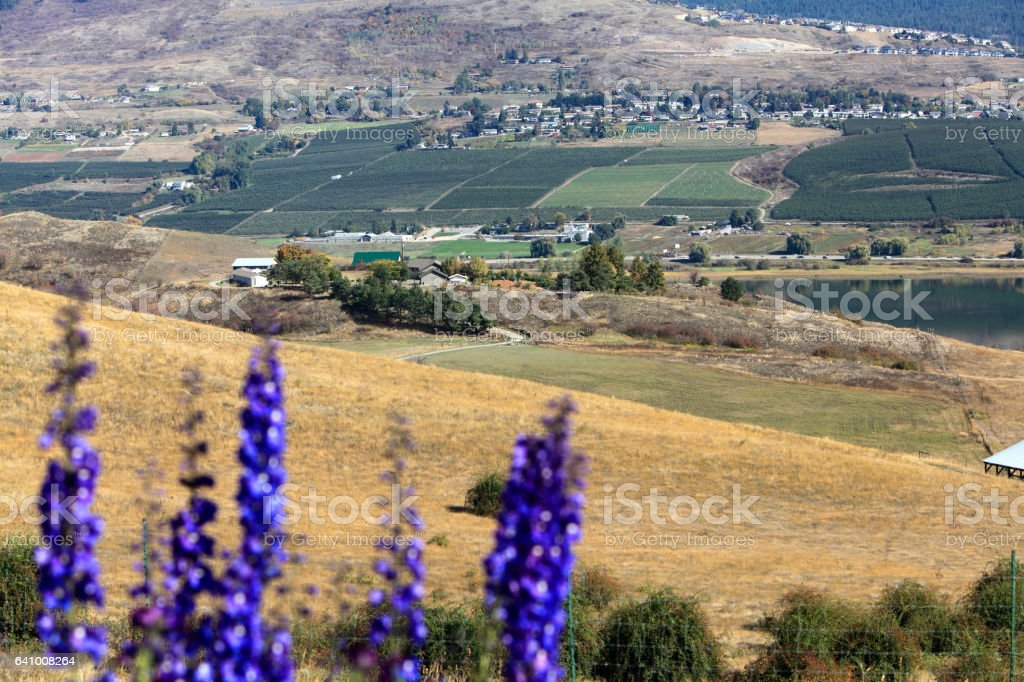 Landscape Of Vernon British Columbia With Orchards And Swan Lake stock photo