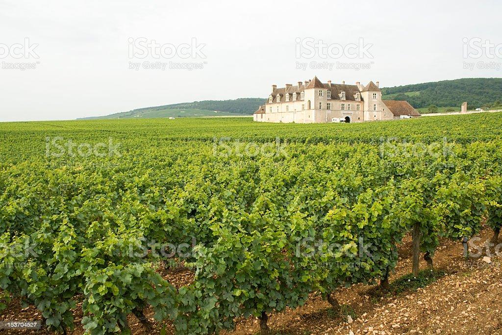 Landscape of Vineyard Clos de Vougeot Chateau Bourgogne stock photo