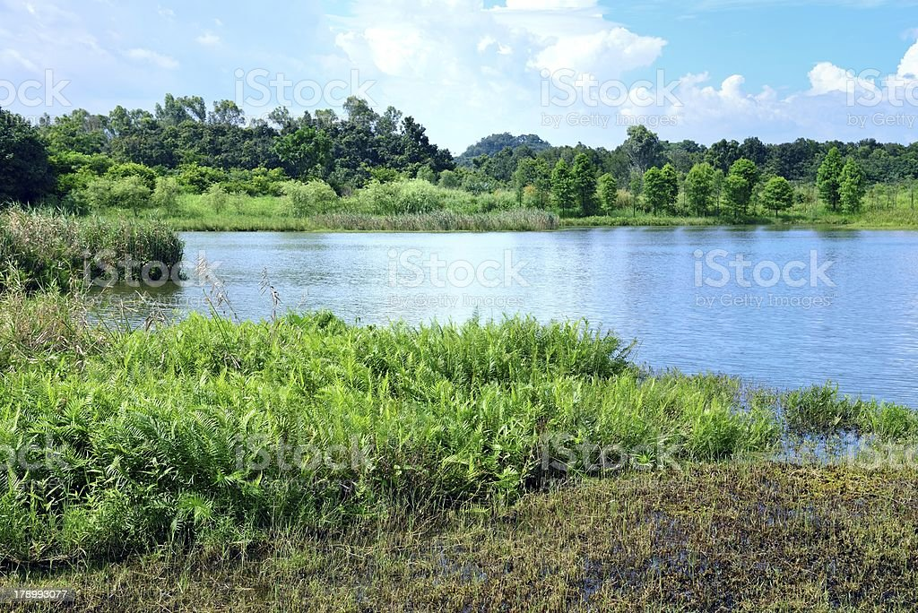 Landscape of Wetland in summer royalty-free stock photo