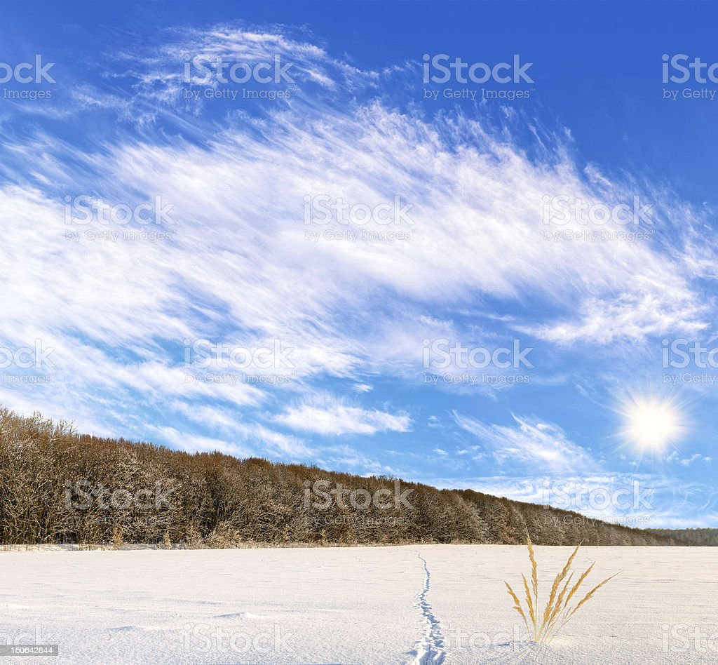 Landscape of winter field with the animal tracks royalty-free stock photo