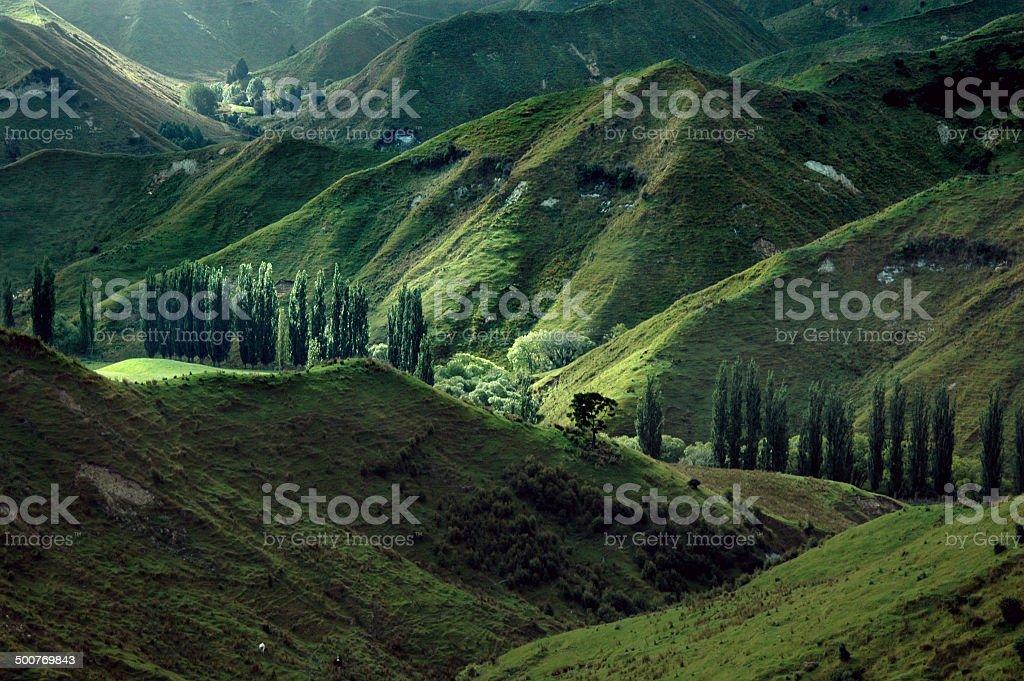 Landscape on Northern Island, New Zealand stock photo