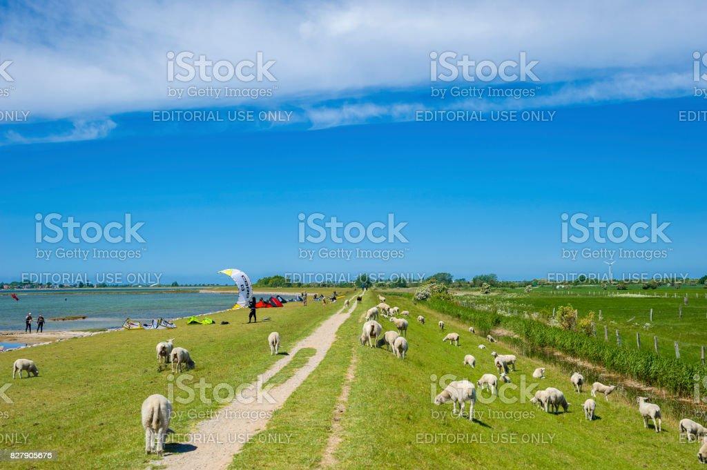 Landscape on the flood embankment in Lemkenhafen stock photo