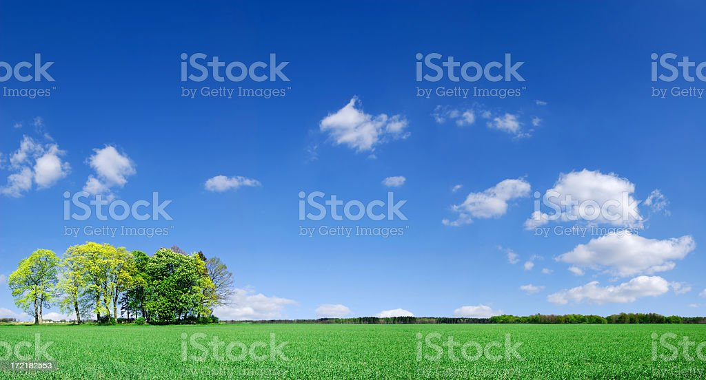 Landscape picture of green grass, trees and white clouds royalty-free stock photo