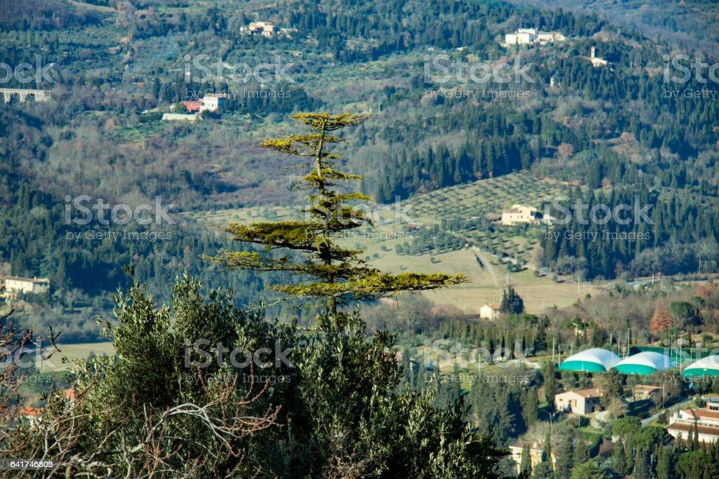 Landscape, pine stock photo