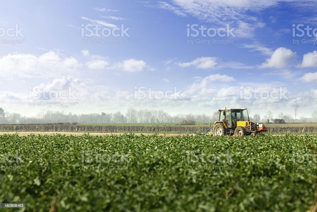Landscape: Potato Field and Tractor royalty-free stock photo