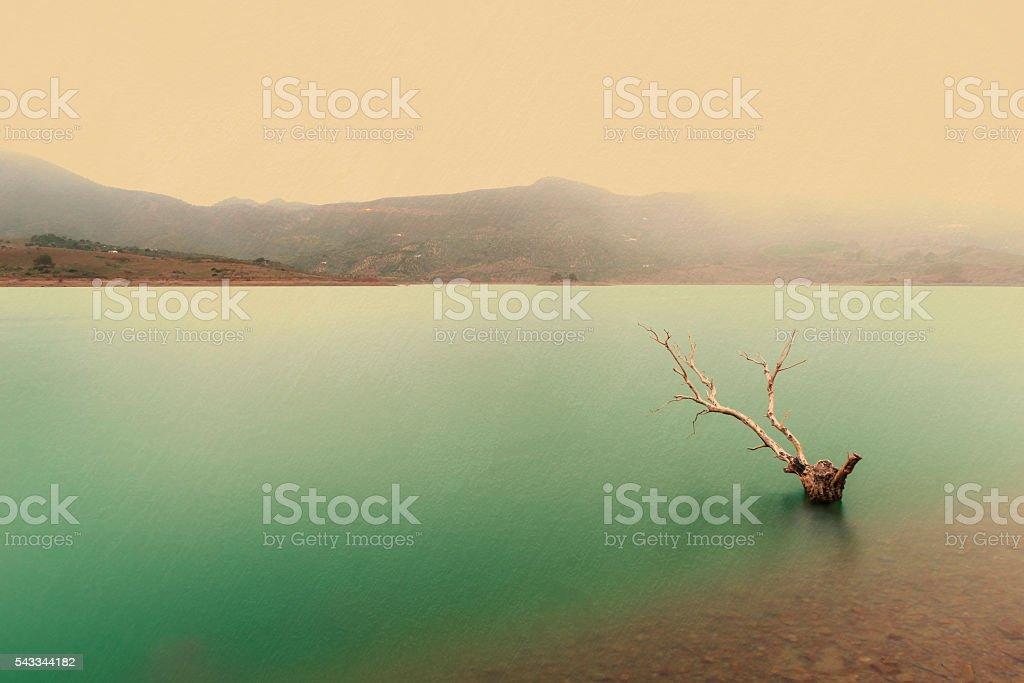 landscape raining, swamp stock photo