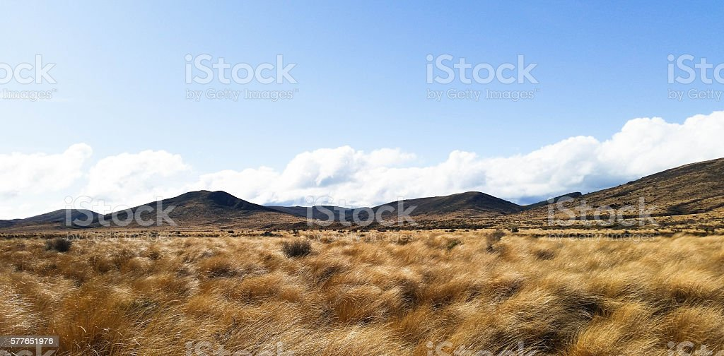 landscape red tussock on the way to Mt.Cook New Zealand stock photo