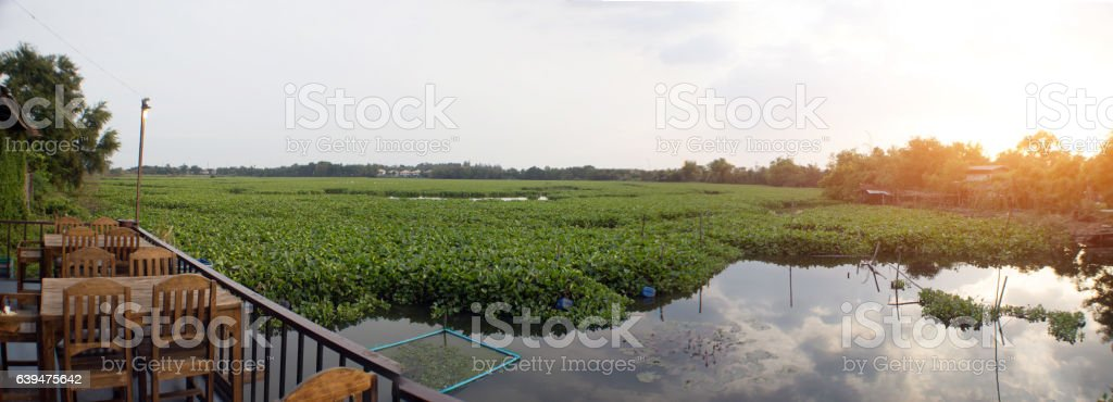 landscape rural life pond with water hyacinth stock photo