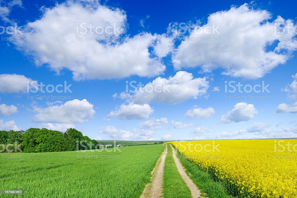 Landscape - Rural path among spring fields royalty-free stock photo