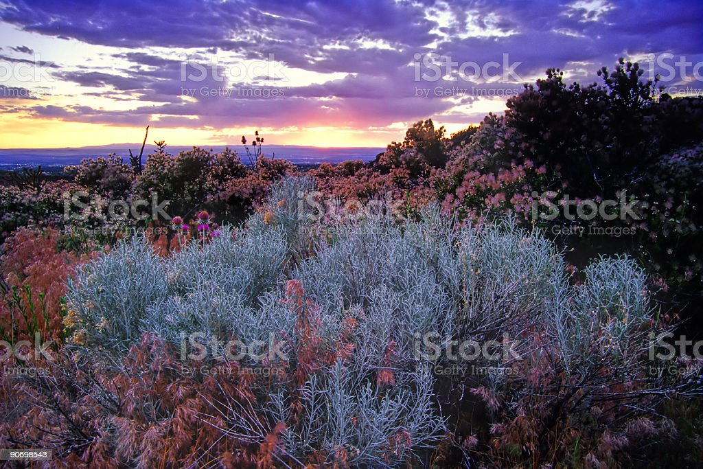 landscape sagebrush sunset sky desert royalty-free stock photo