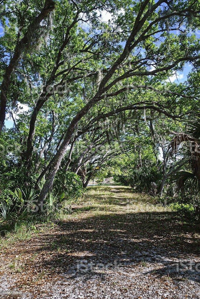 Landscape Savanna stock photo