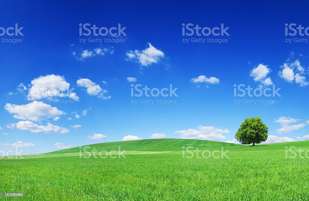 Landscape - see description royalty-free stock photo