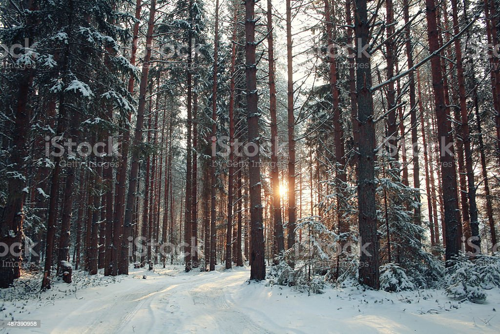 landscape snow trees dense forest in winter stock photo