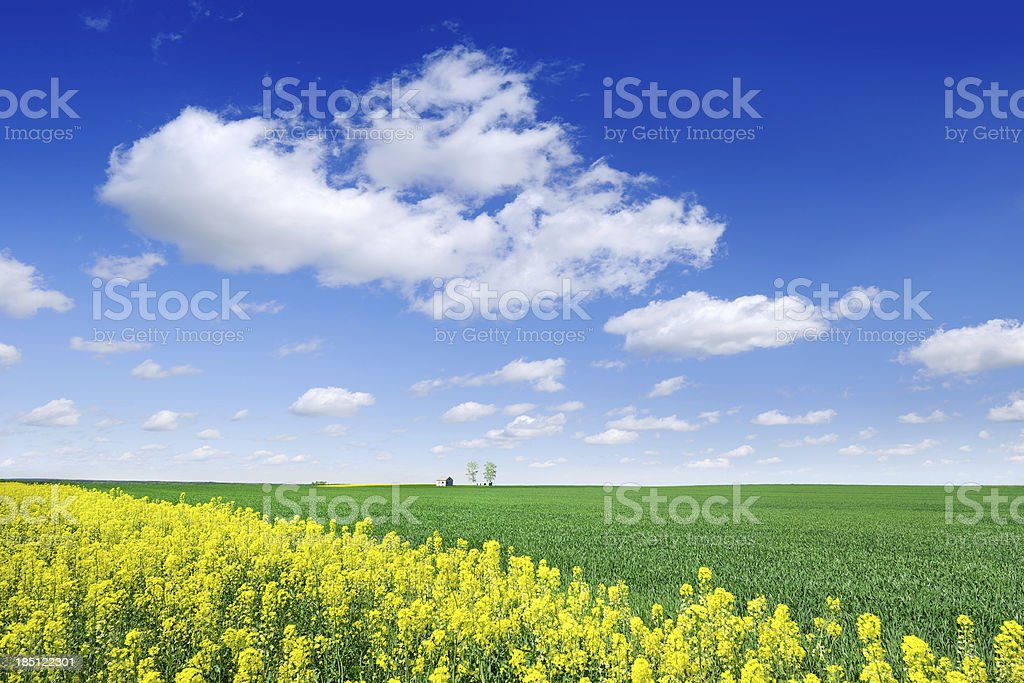 Landscape - Spring fields, the blue sky and white clouds royalty-free stock photo