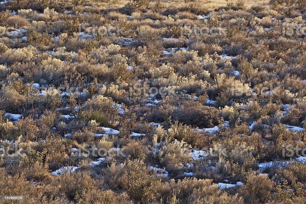 landscape sunset desert meadow stock photo