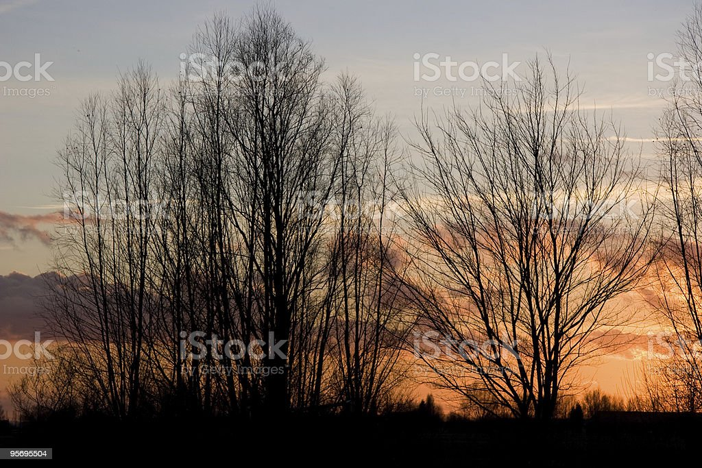 landscape sunset in the trees at winter royalty-free stock photo