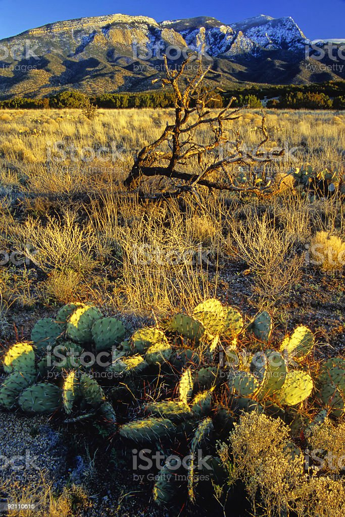 landscape sunset mountain cactus winter royalty-free stock photo