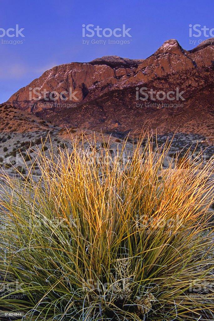 landscape sunset mountain desert yucca royalty-free stock photo