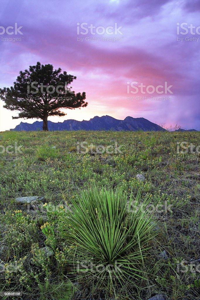landscape sunset mountain sky yucca tree royalty-free stock photo