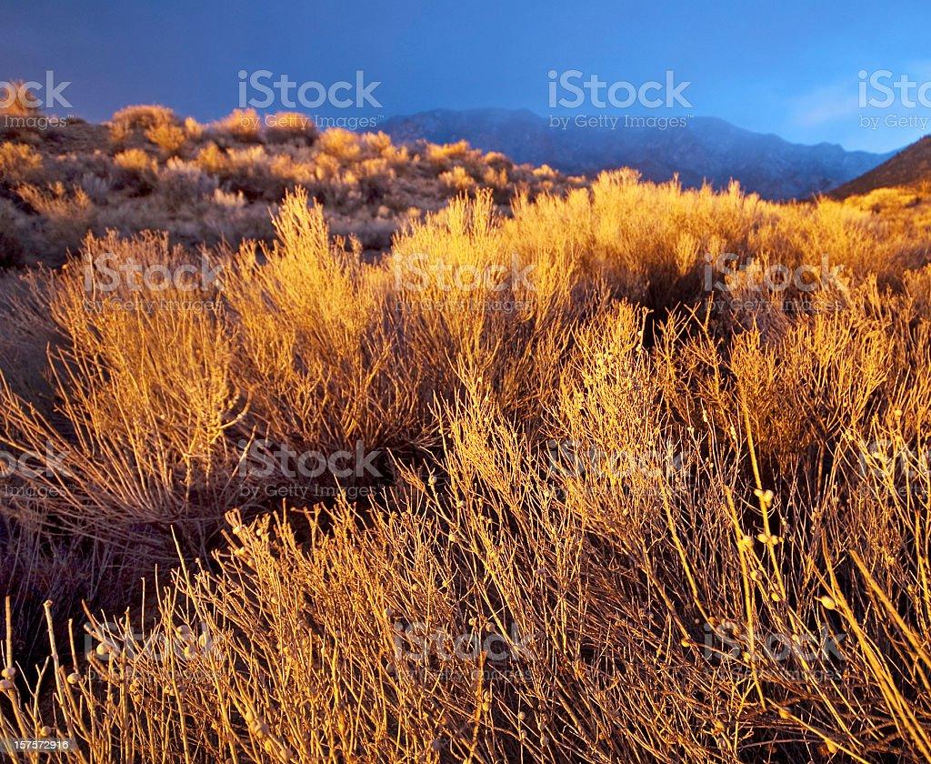 landscape sunset sagebrush mountain royalty-free stock photo