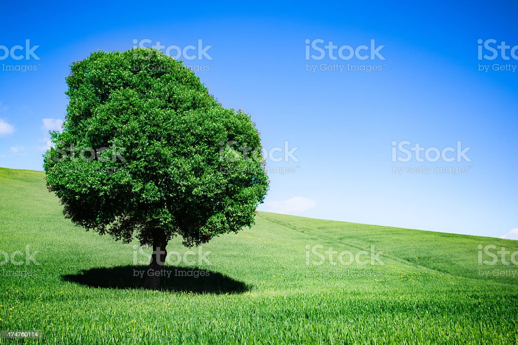 Landscape Tuscan hills royalty-free stock photo