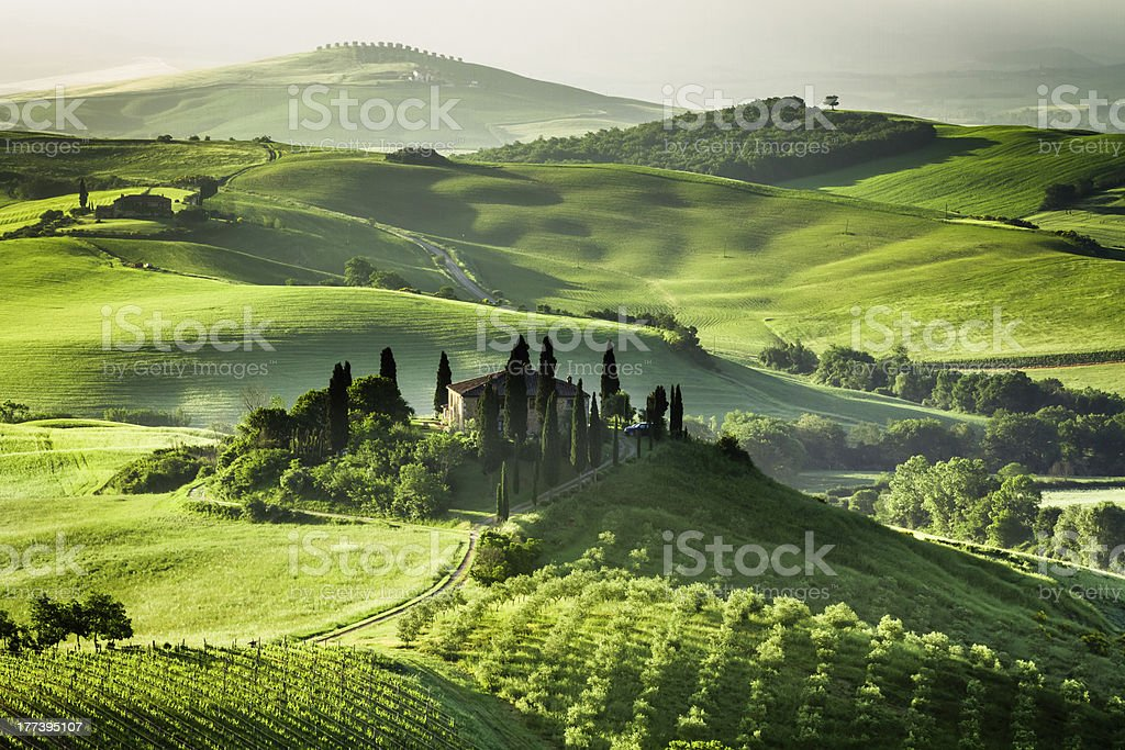 Landscape view of green olive groves and vineyards royalty-free stock photo