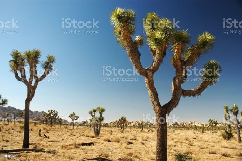 Landscape view of Joshua Tree National Park stock photo