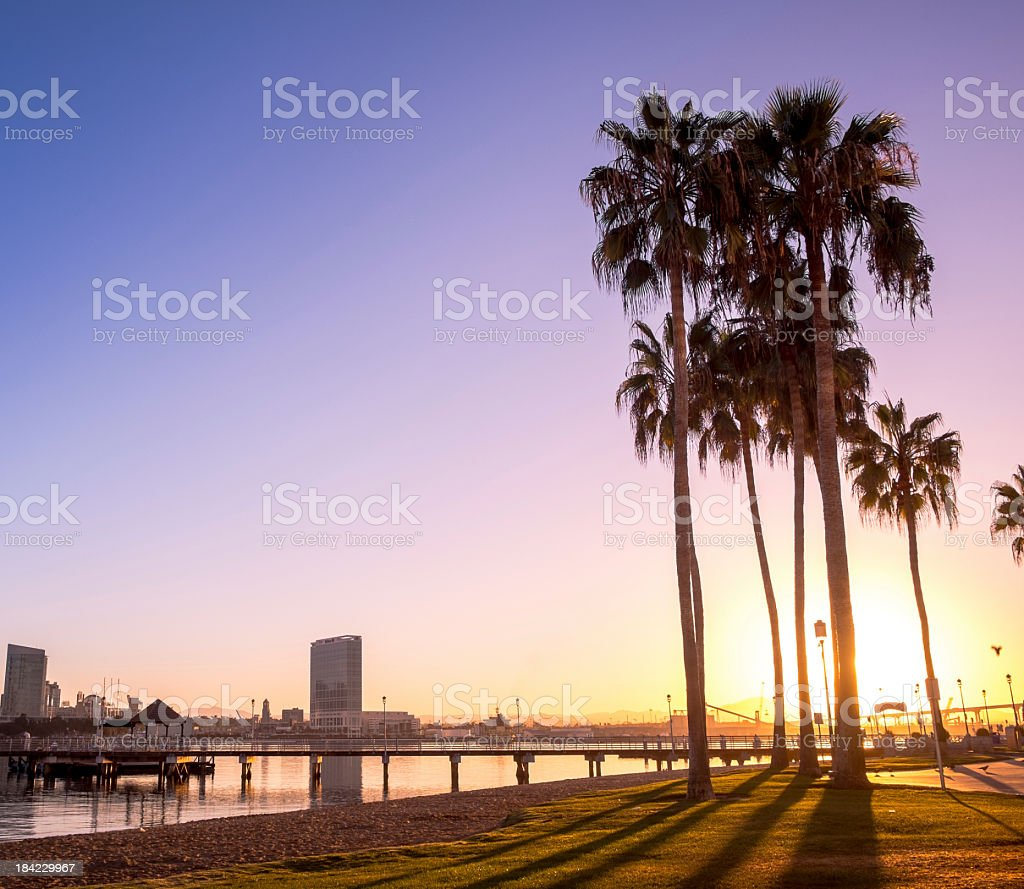 Landscape view of palm treees on San Diego, California shore stock photo