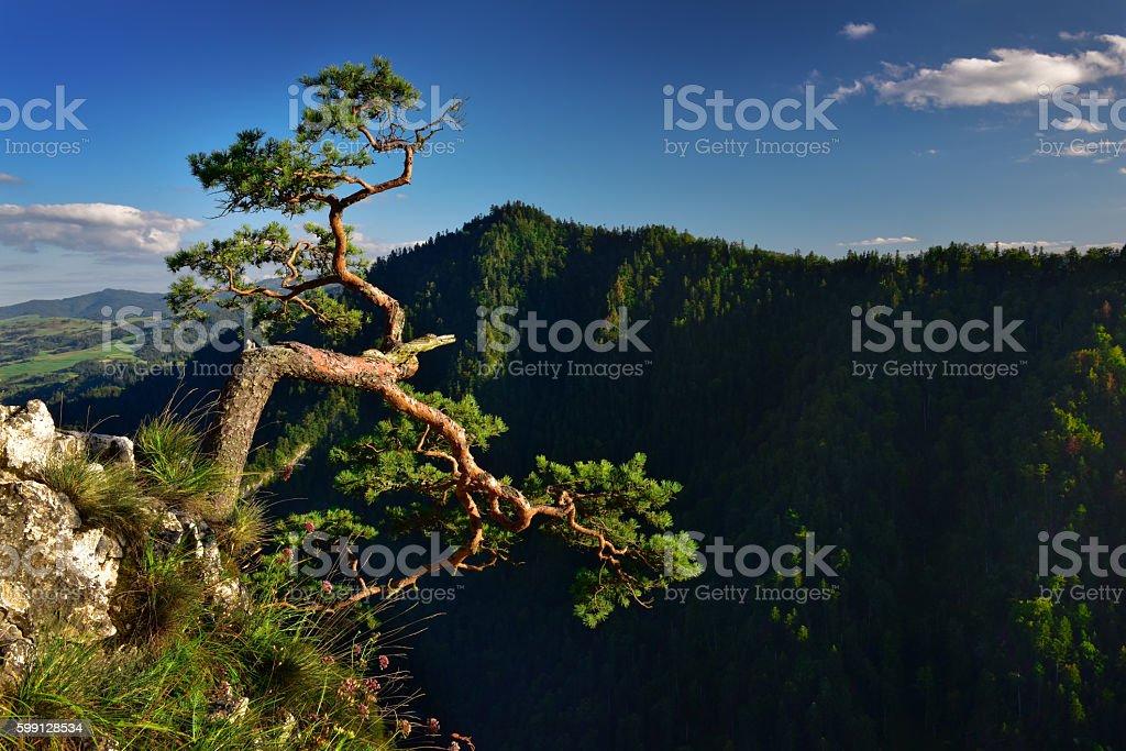 Landscape view of Sokolica peak in Pieniny mountain stock photo