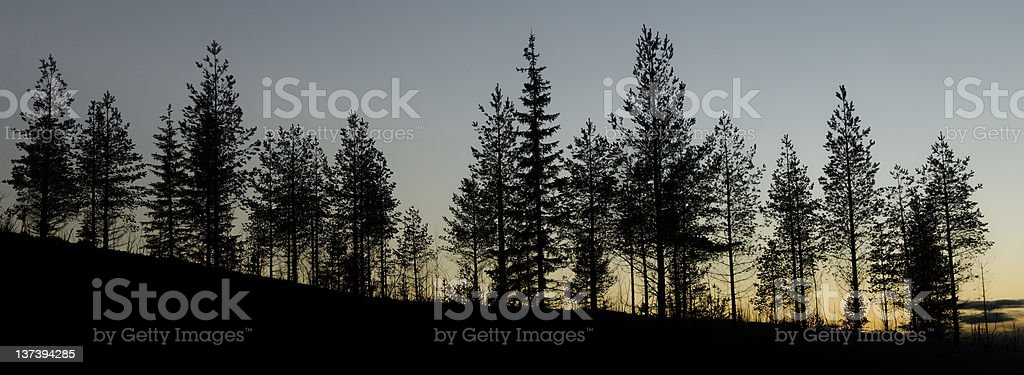 Landscape view of some trees during sunset stock photo