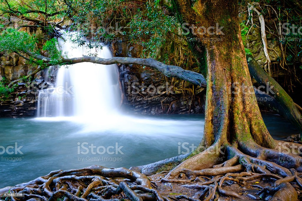 Landscape view of waterfall and old tree, Maui, Hawaii stock photo