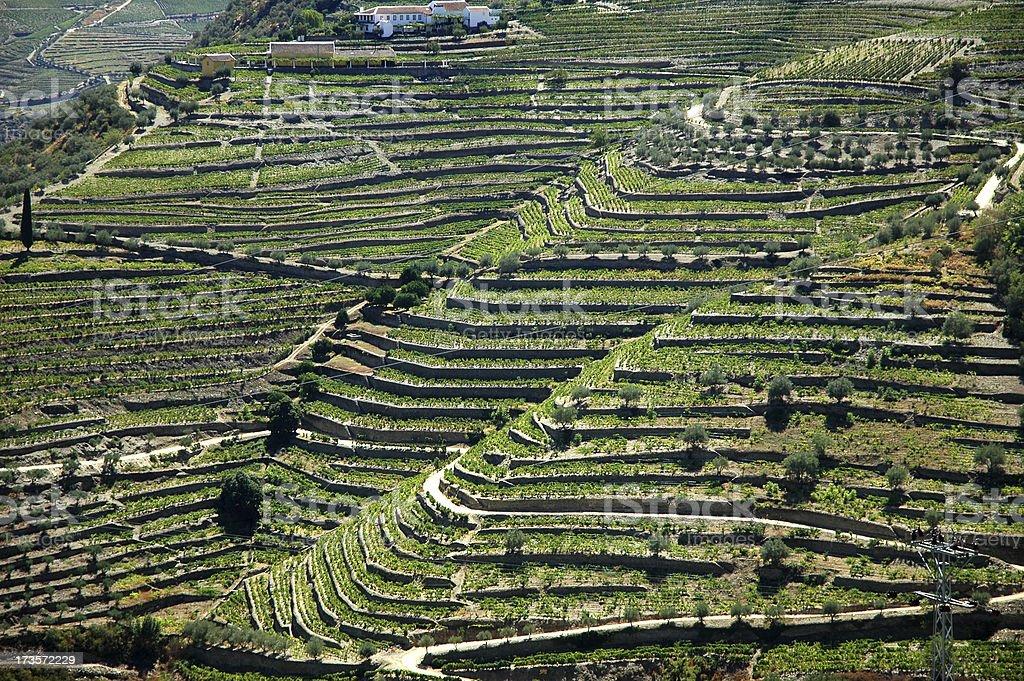 Landscape - Vineyards stock photo