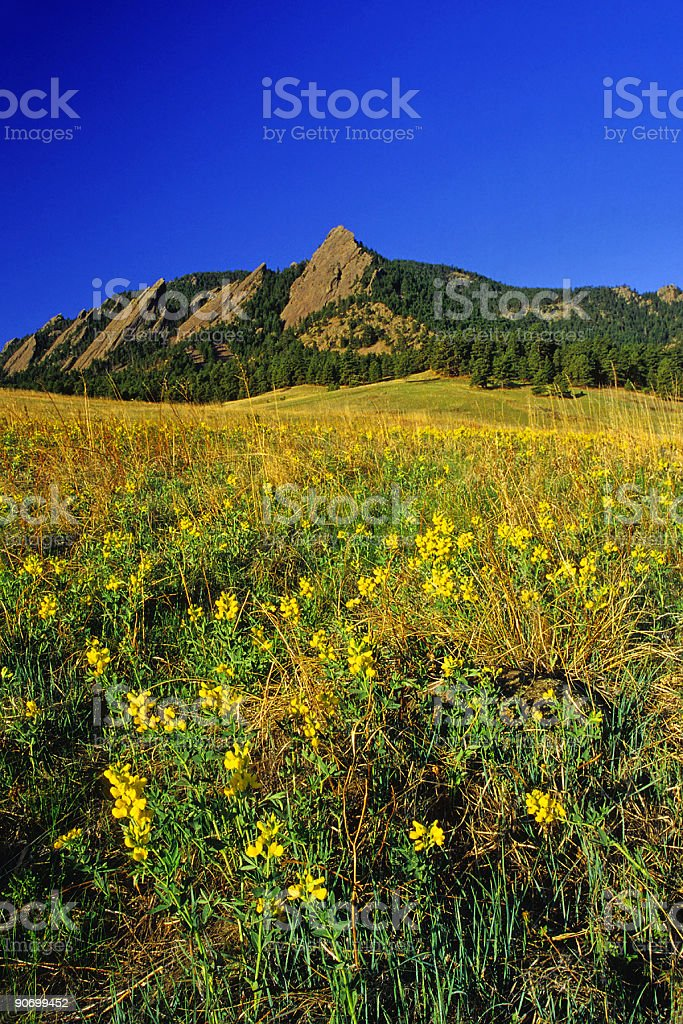 landscape wildflower mountain meadow royalty-free stock photo