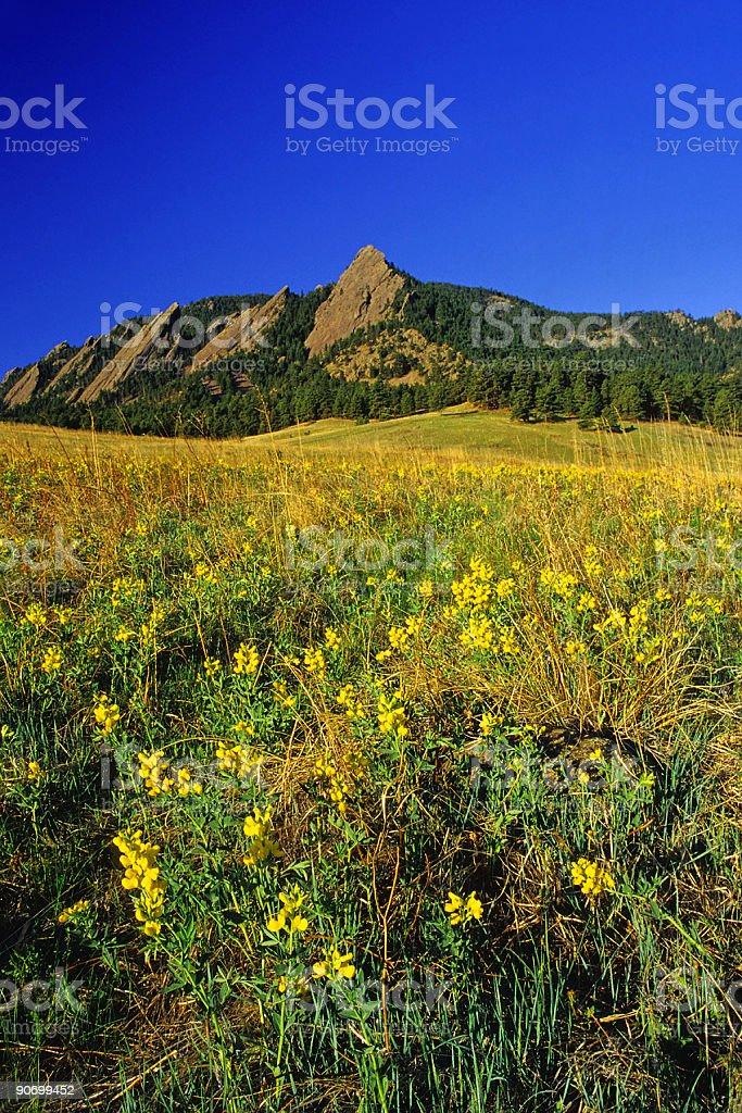 landscape wildflower mountain meadow stock photo