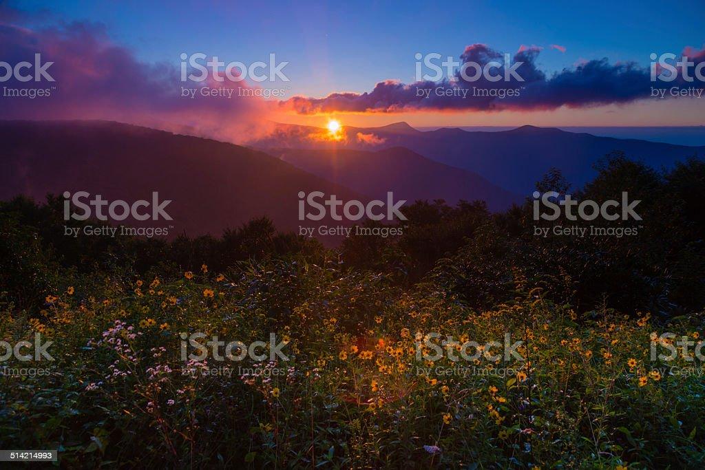 Landscape wildflower sunrise Blue Ridge stock photo