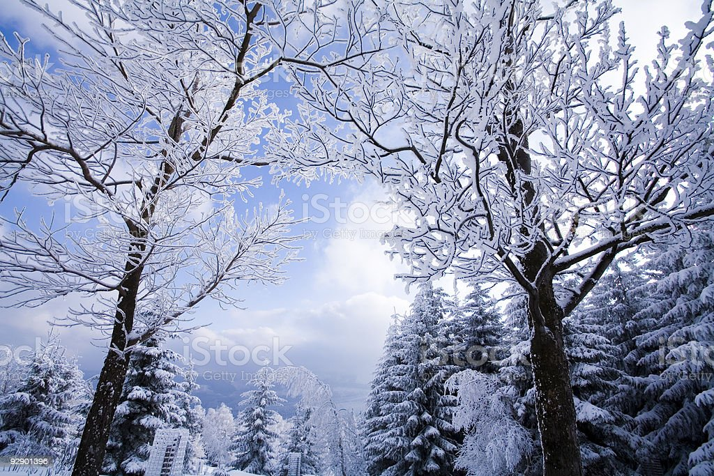 Landscape winter stock photo