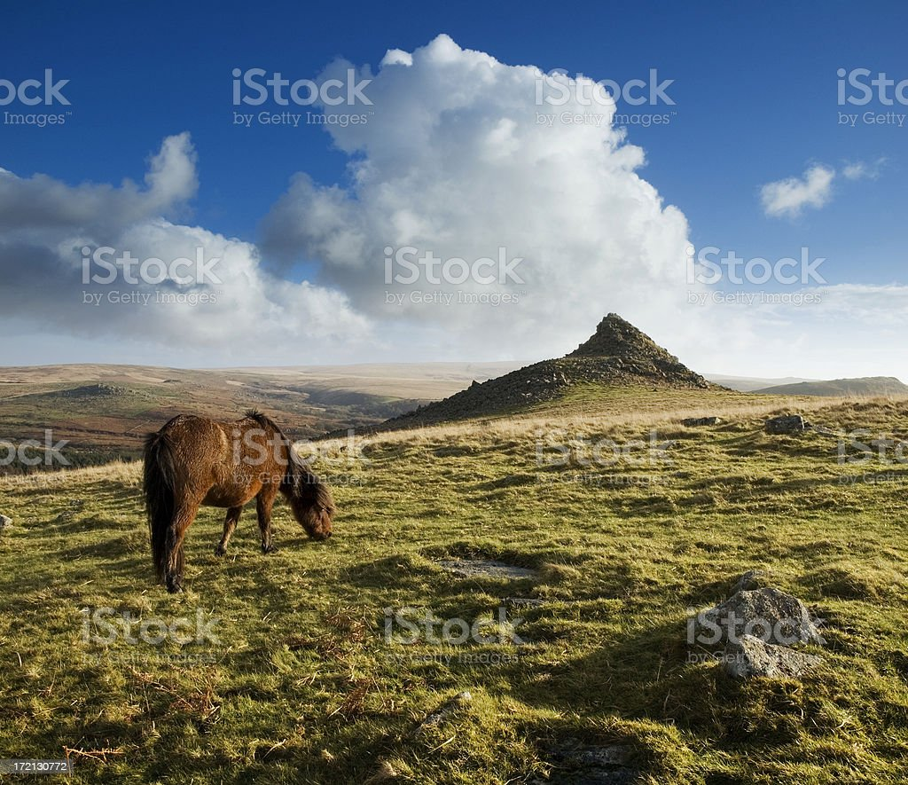 Landscape with a grazing horse in Dartmoor on a sunny day stock photo