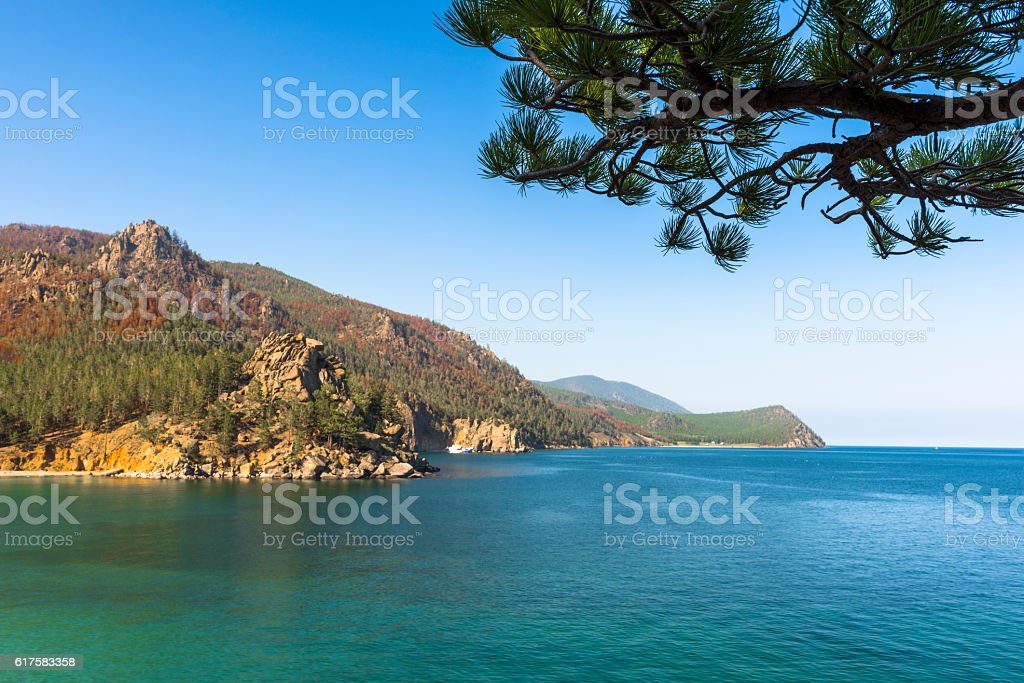 Landscape with a pine branch stock photo