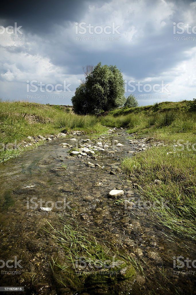 Landscape with a tree before storm stock photo
